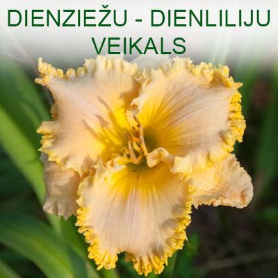 Dienziežu - Dienliliju veikals